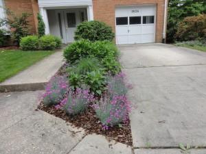 Bethesda Driveway Garden Soon After Installation