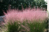 Grasses Muhly